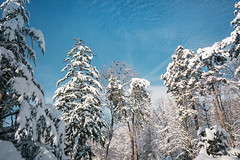 Forest covered with snow. Park in Petrovac na Mlavi