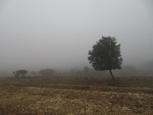 20190916 12 077 Frances Nebel Bäume Baum Steine Weg