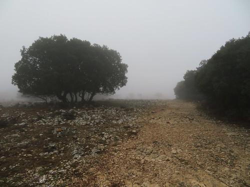 20190916 12 071 Frances Nebel Bäume Baum Steine Weg