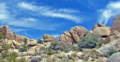 Desert Flyover, Joshua Tree NP, CA 2013