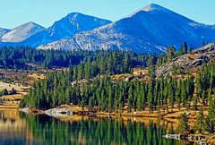 Land of the Pine, Upper Yosemite NP 2018