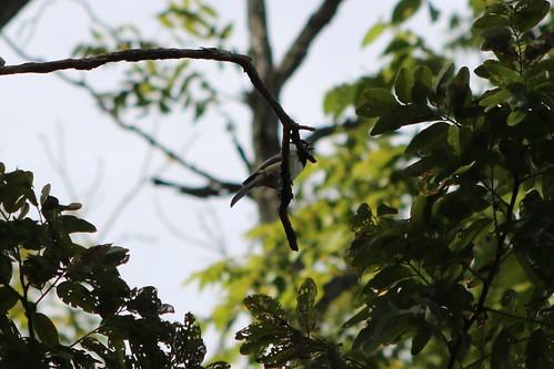 My first decent pic of a Carolina Chickadee