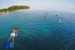 A group of people snorkeling near a small island