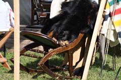 Bear skin -- Camp Life – War of 1812 Reenactment, The Battle of Georgian Bay