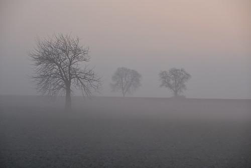 Les brumes de l'aube