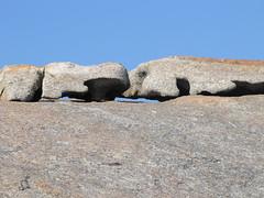 Granite Critters II - Bald Head Walk, Torndirrup Peninsula, Albany, Western Australia
