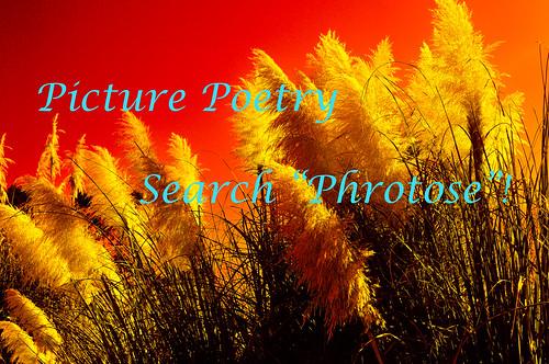 Phrotose