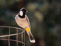 Birds - Birds - Birds