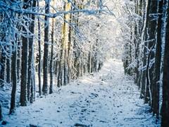 Im Winter Wald | 18. Januar 2019 | Schleswig-Holstein - Deutschland