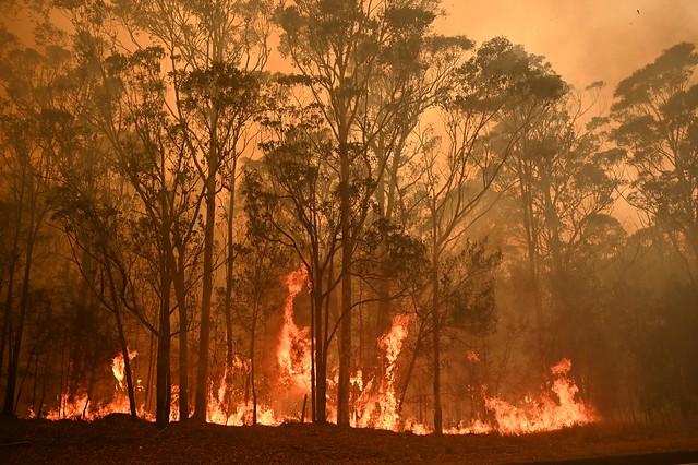 Incêndios na Austrália já atingiram mais de 5 milhões de hectares - Créditos: Peter Parks/AFP