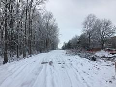 Poplar Tree Road