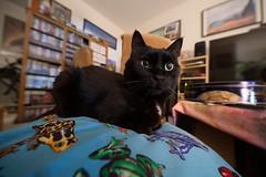 11mm Cat