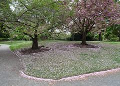 Blossom Edges