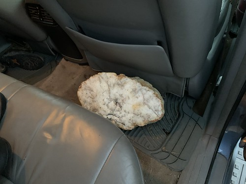 Cannon county geodes and a piece of coral from Rutherford county