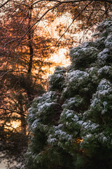 Kinda-Sorta Winter Wonderland
