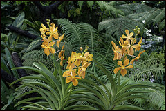 Singapore Botanical Gardens-14=