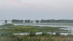 Early rise in the wetlands