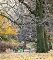 Late Fall in Central Park