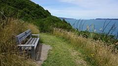 Bench on Mātiu-Somes Island (4)