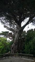 Bench on Mātiu-Somes Island (8)