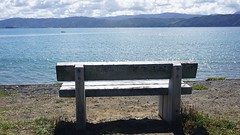 Bench in Seatoun (2)