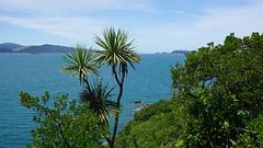 Mātiu-Somes Island (2)