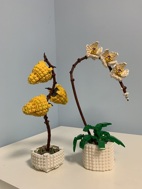 盆栽 Growing Plant's