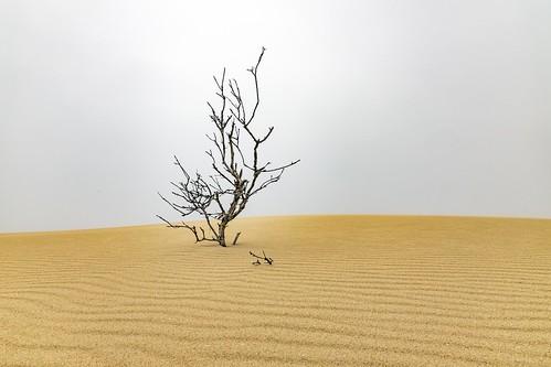 Small Trees-2