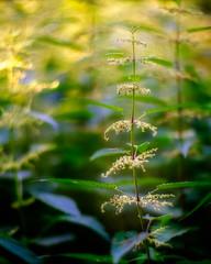 """""""Unkraut"""" - weed - """"mala hierba"""""""