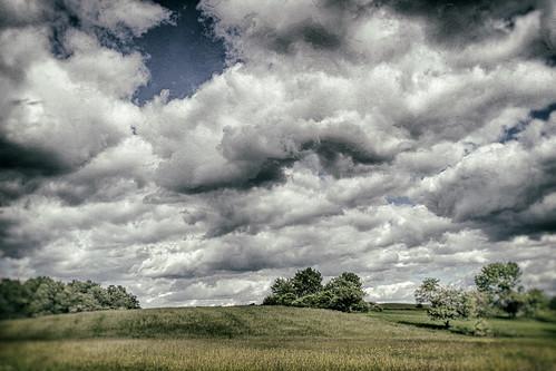 Winter dream of a summer meadow