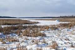 Winter scenery, Drummond Island
