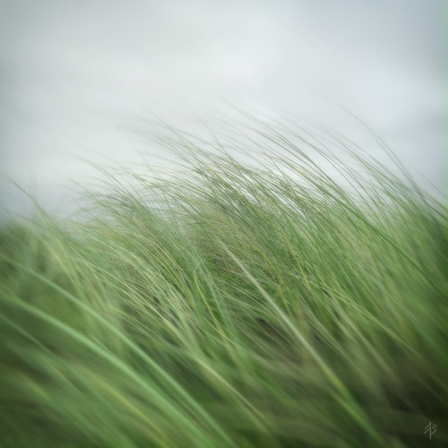 Abstract #2 - Leaves Of Grass...
