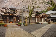 Spring in Maizuru