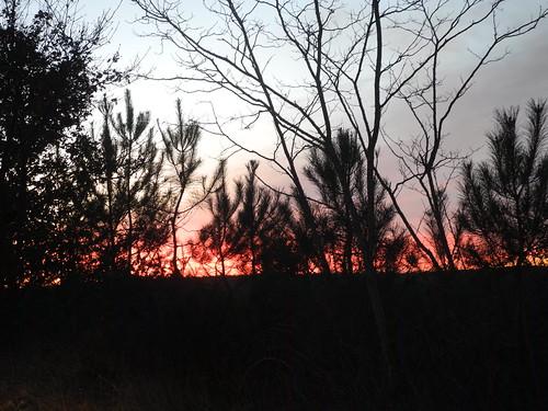 Il n'y a pas le feu / Kein Waldbrand / Нет лесного пожара