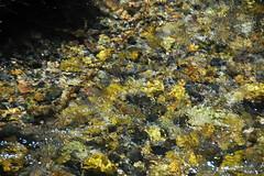 Deer Creek (Preuss Range, Idaho, USA) 7