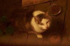 12/11/19 Rhodie at the kitchen door, DSC_0596 (1)