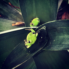 Two Friends in A Frond.