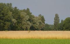 Saint-Julien-de-Chédon (Loir-et-Cher)