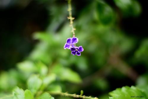 Pequeña flor de verano / Little summer flower
