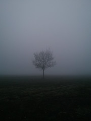 A lone tree stands in a field surrounded by fog