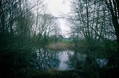 Wasser & Bäume | 13. Januar 2020 | Hohenfichel - Kreis Plön - Schleswig-Holstein