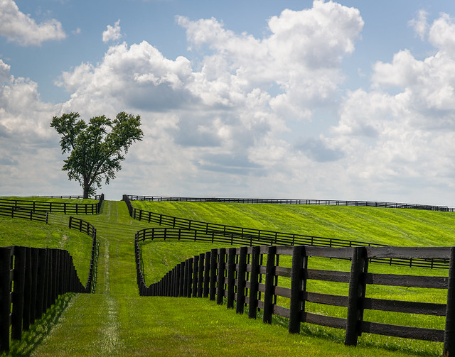 Fences in Kentucky Thoroughbred Country