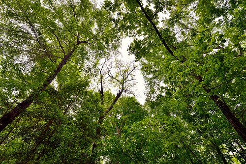 Trees Charmed (Congaree National Park)