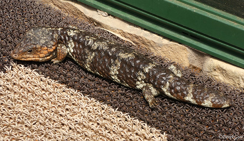 Trying hard to blend in with the door mat.