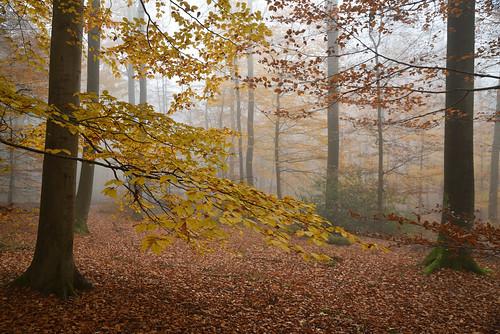 C'était l'automne (2)