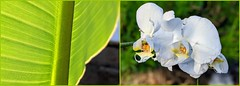Tropical Colors - the Plant Version