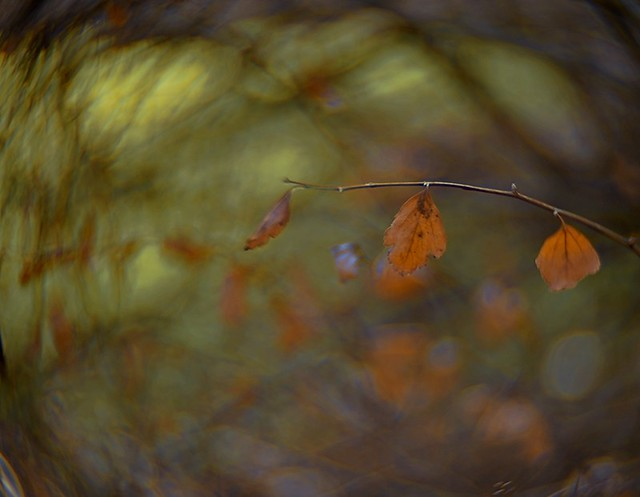 Photo:Shrouded In Bokeh By ☼☼Happy Autumn☼☼