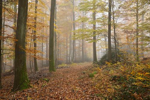 C'était l'automne (3)