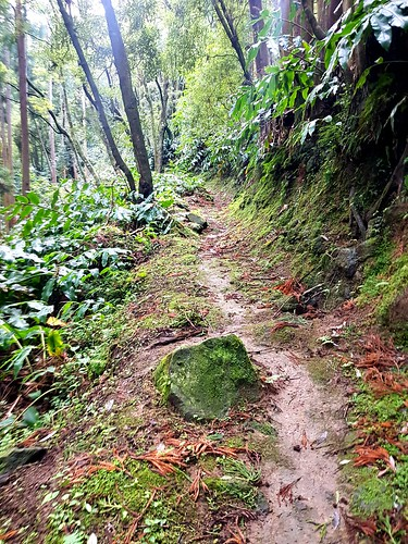 Short but spectacular Hike - North East San Miguel - Azores -  PRC38SML - Lomba Del Rei - (Hike 3 | Series 2 2020) starting in village of Achadinha