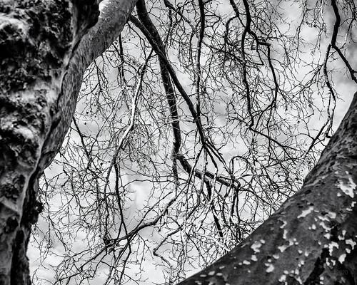The Tree's Eye...